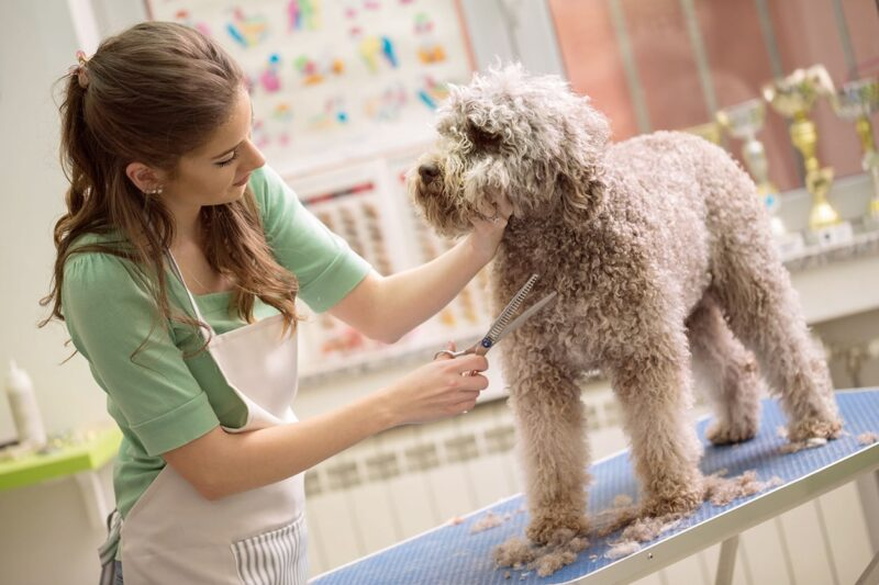 Ozone Water for Pet Grooming